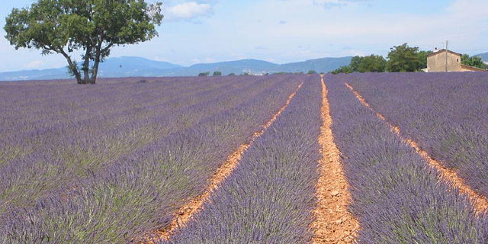 Week-end sur la route de la lavande en Provence