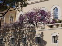 Palais princier de monaco 52 weekends for Au jardin de victorine nice
