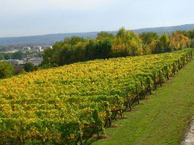 Vignoble de saint germain en laye 52 weekends - Office du tourisme saint germain en laye ...