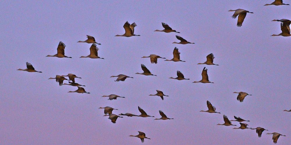 Week-end nature sauvage au lac du Der : suivez les oiseaux migrateurs