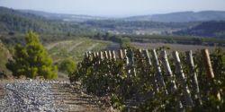Week-end sur la route des vins de Corbières