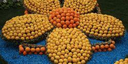 Week-end vitaminé dans les jardins de Menton
