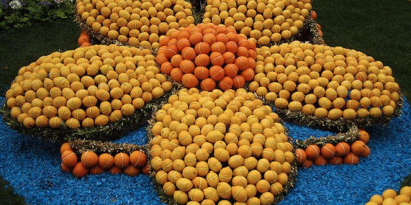 Fête Du Citron © Psd