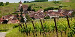 Week-end sur la route des vins d'Alsace, de Ribeauvillé à Kaysersberg