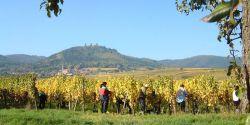 Week-end sur la route des vins d'Alsace, de Colmar à Thann